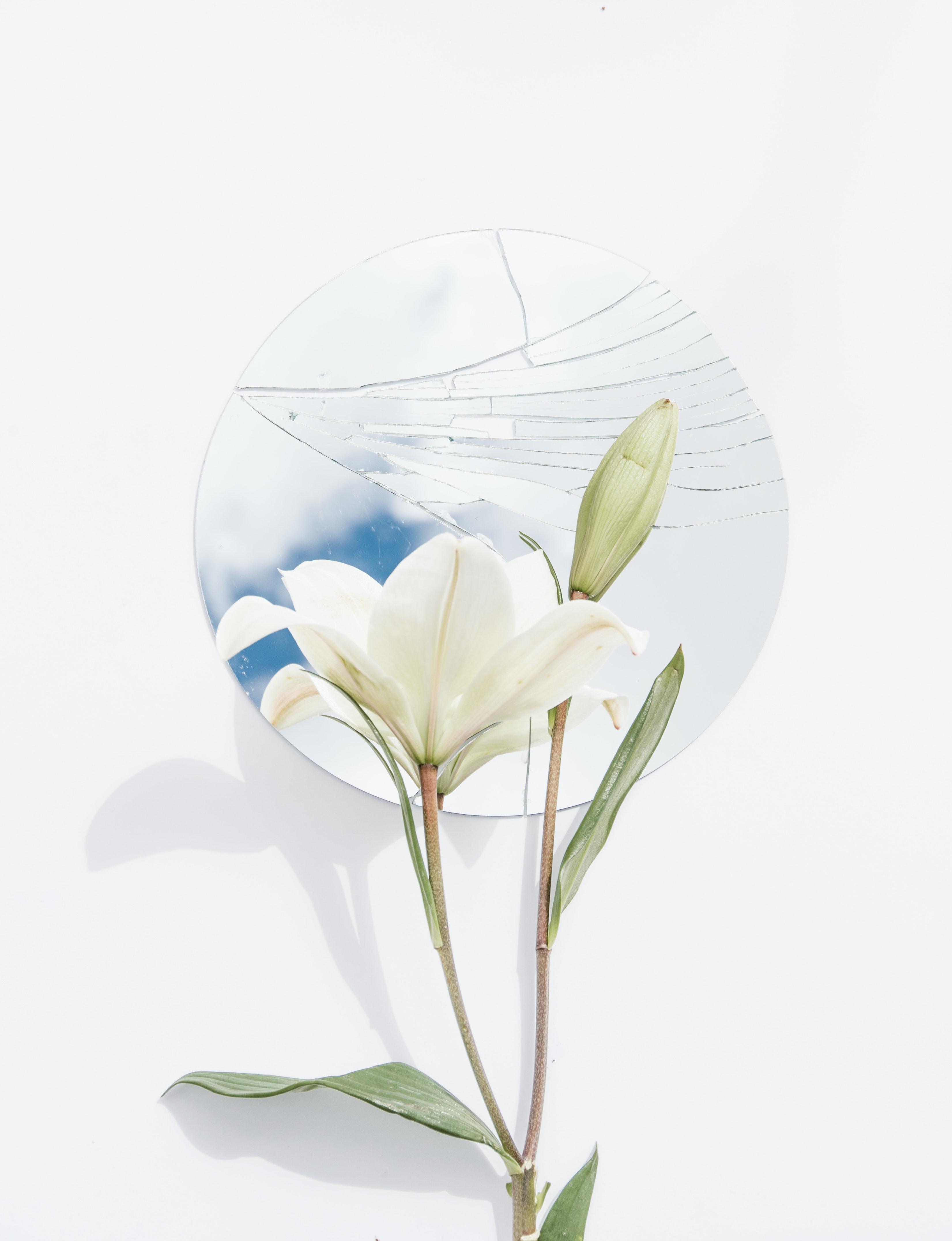 leyen.life - truyện hoa ly trắng